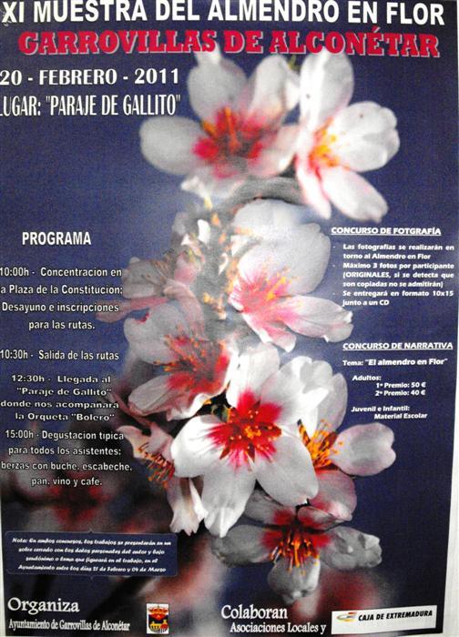 XI Muestra del Almendro en Flor