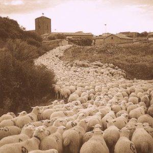 Acondicionan las vías pecuarias de la Vía de la Plata a su paso por Cáceres