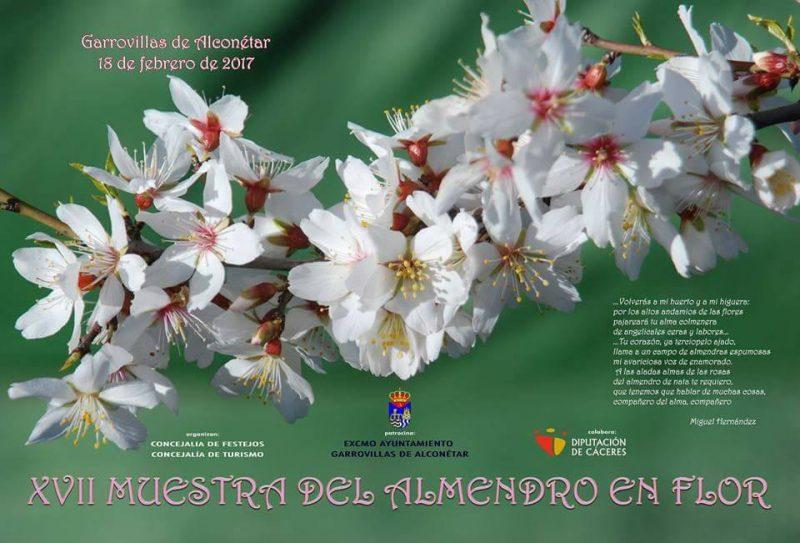 2017 Muestra del Almendro en Flor en Garrovillas de Alconéta