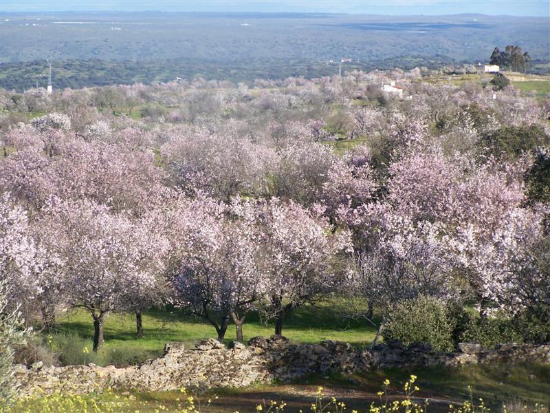 X Muestra del Almendro en Flor